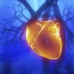 srcevmuskul