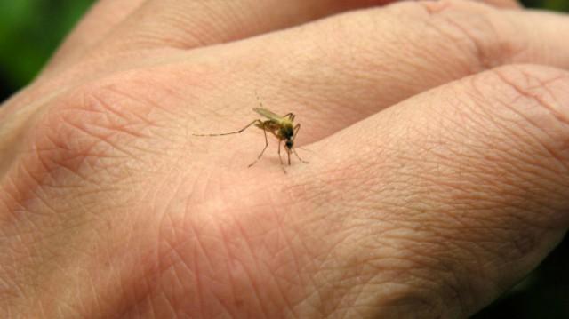 komarec web